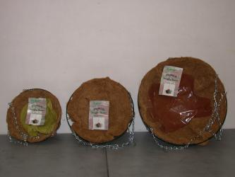 WE und blühfähig 4,5 cm Ariocarpus spez