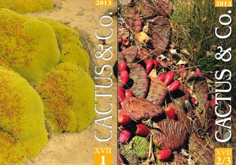 Cactus & Co 2013