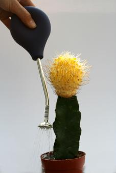 Ball-shaped watering tool