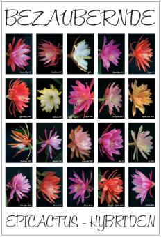 Poster # 3 - Epicactus Flowers