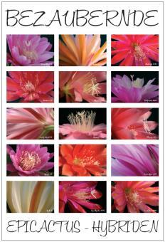 Poster # 4 - Epicactus-Hybriden - Blütendetails