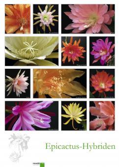 Poster # 5 - Epicactus-Hybriden - Blütendetails