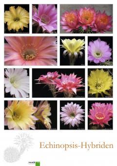 Poster # 6 - Echinopsis-Hybriden