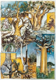 Poster # 1 - Caudexpflanzen
