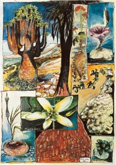 Poster # 2 - Caudexpflanzen