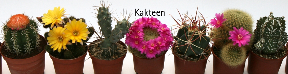 Banner Kakteenpflanzen